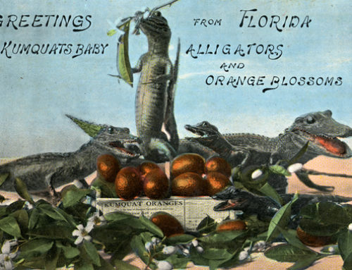 Alligators in Virginia
